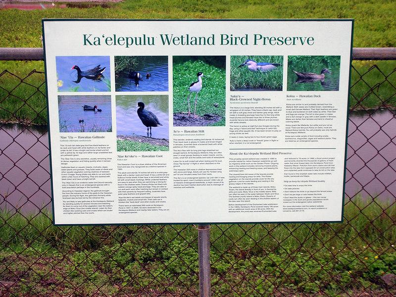 31. Ka'elepulu Wetland Bird Preserve.JPG
