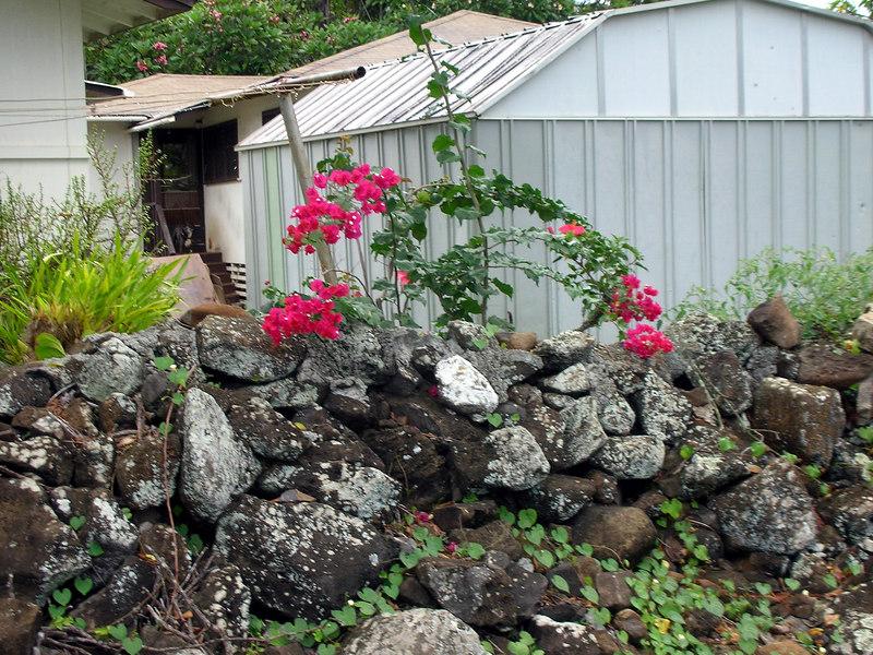 42. Ulupo Heiau Hawaiian Temple.JPG