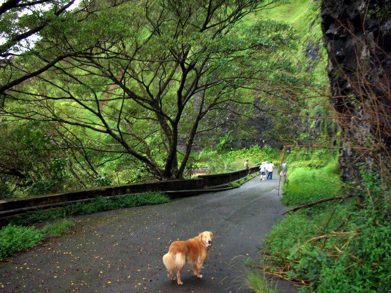 73. Walking On Old Pali Road.JPG