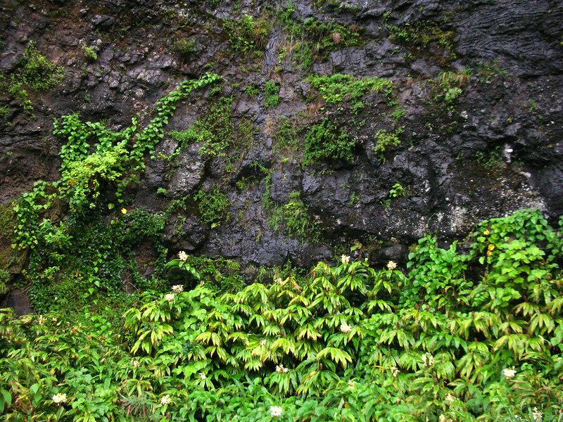 76. Dry Waterfall Along Old Pali Road.JPG
