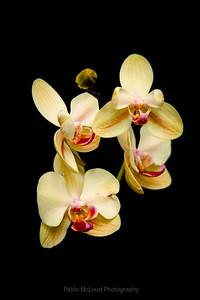 Orchidland