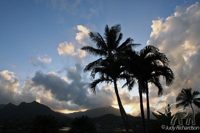 Silhouetted  Palms with Ko'olau Mountains at sunset~Kailua, Hawaii