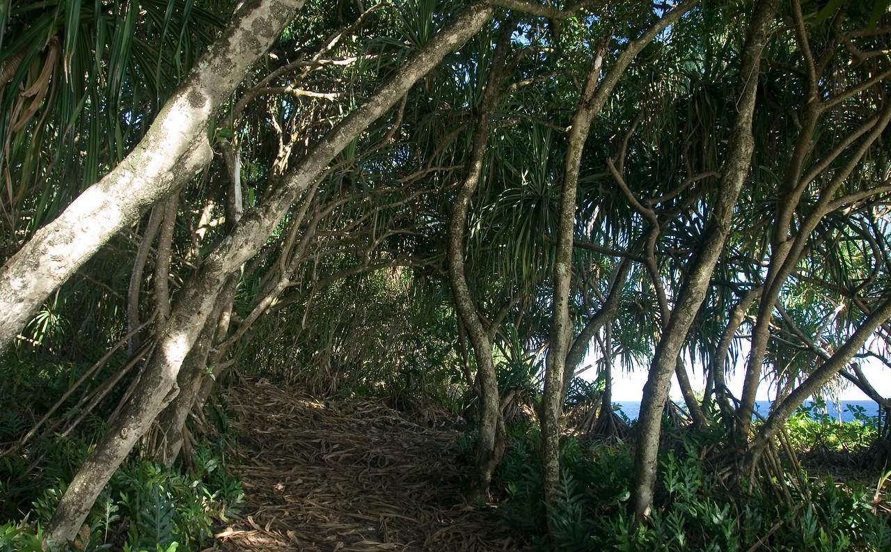 Jungle alongside the Kalapana highway on the Puna coastline