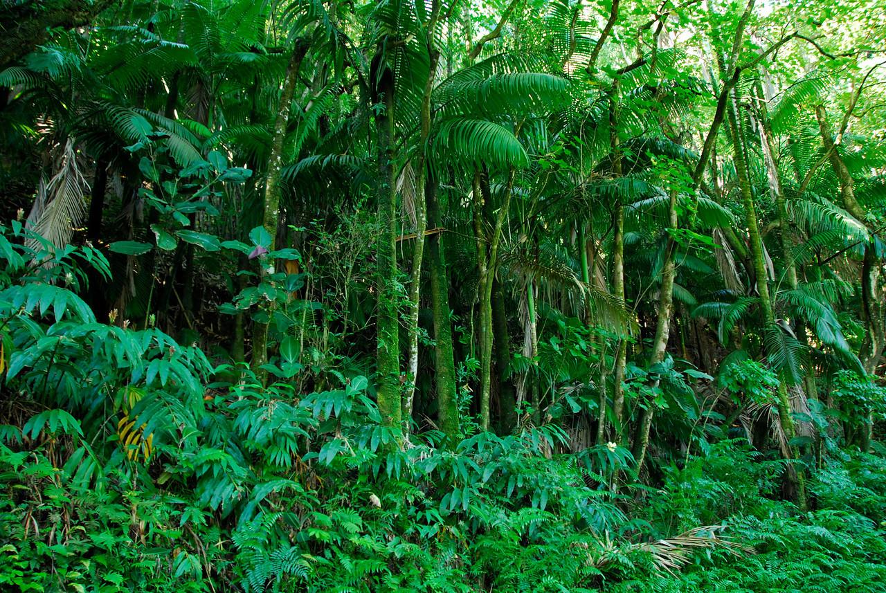 Jungle view near the Hawaii Botanical Gardens