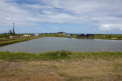 Shrimp Farm - North Shore
