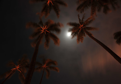 Palms under the moonlight  (C) 2009 Brian Neal