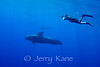 Short-finned Pilot Whale (Globicephala macrorhynchus) and photographer Dave Kearnes - Offshore Kona, Big Island, Hawaii