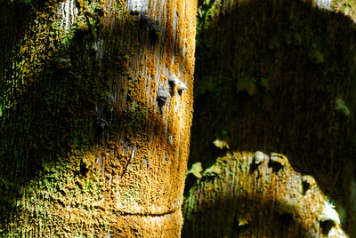 Multi-colored moss on a tree at the Hawaii Tropical Botanical Gardens outside of Hilo.