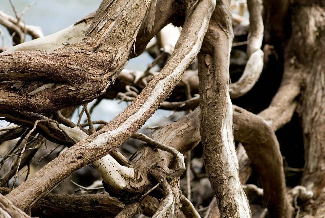 Dried roots and driftwood at Onomea Bay