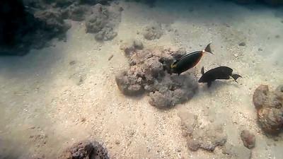 HI underwater-26