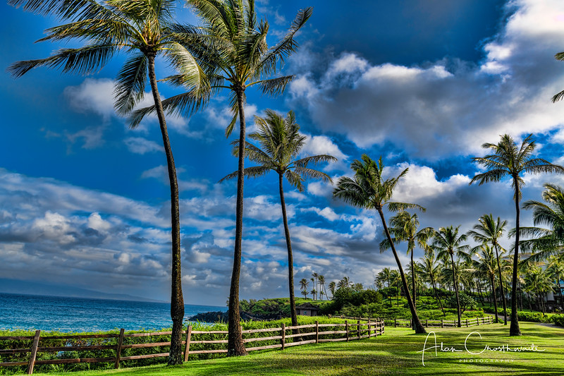Palms at Kapalua.