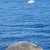 Whale watching during our snorkelling trip