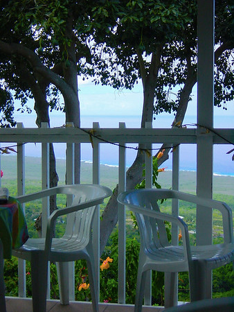 Two Chairs under the Avocado Tree