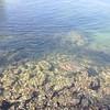 Turtles that swim through the lagoon
