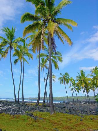 Coconut Trees on Beach 1