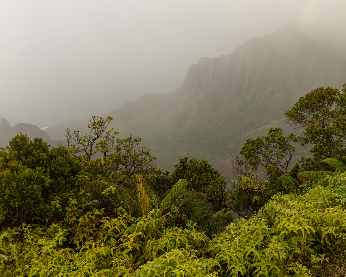 Fog and Na Pali Coast, HI