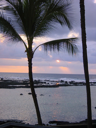 Coconut Tree at Sunset