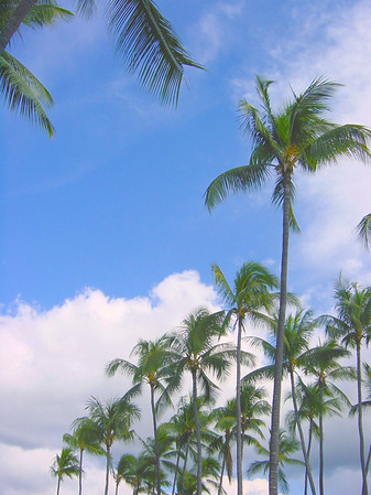 Coconut Trees and Sky