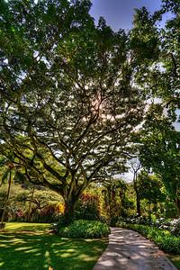 Looking into the Sun, Waimea Valley, Oahu