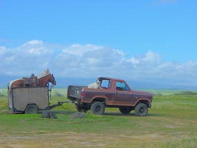 South Point Cowboy Rig