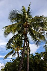 Kuhio Beach Park (21)