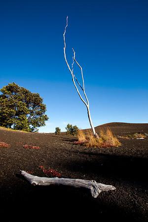 Devastation Trail, Volcanoes National Park, Hawai'i