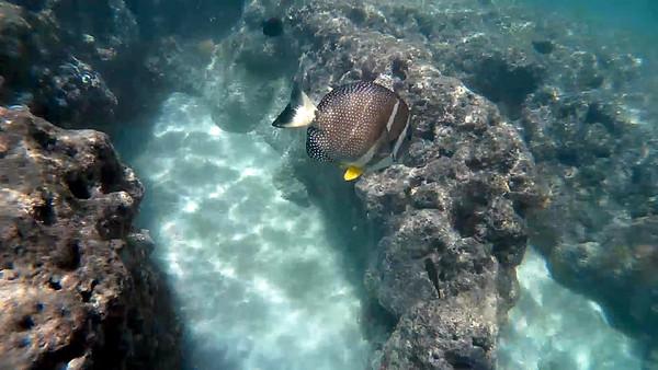 HI underwater-20