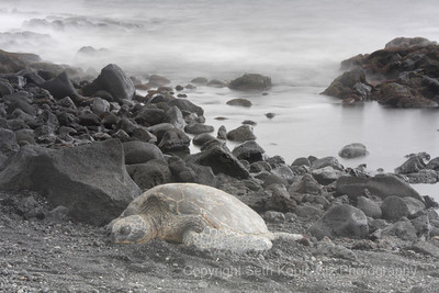 Sea Turtle 1 – Black Sand Beach, Hawaii (2009)