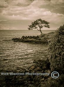 Sepia Coast