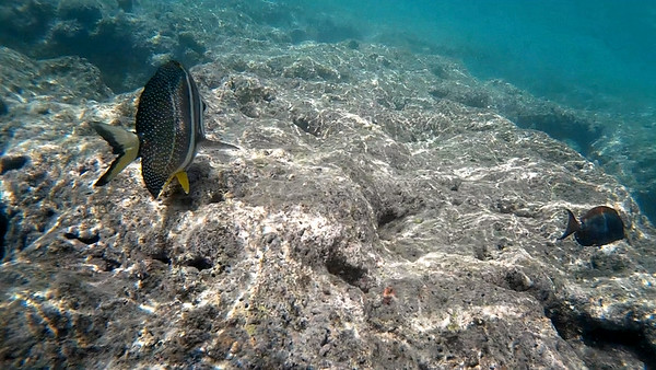 HI underwater-19