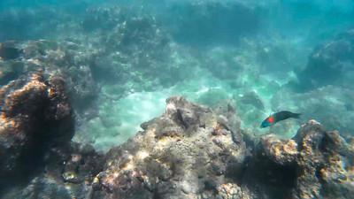 HI underwater-3