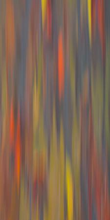 Rainbow Eucalyptus Abstract III