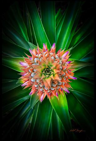 My Pineapple