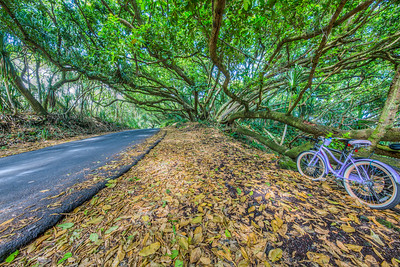 Route 137 on the Big Island of Hawaii