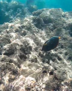HI underwater-1