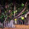 Kuhio Beach Park (11)
