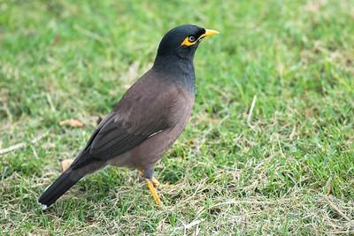 Mynha Bird