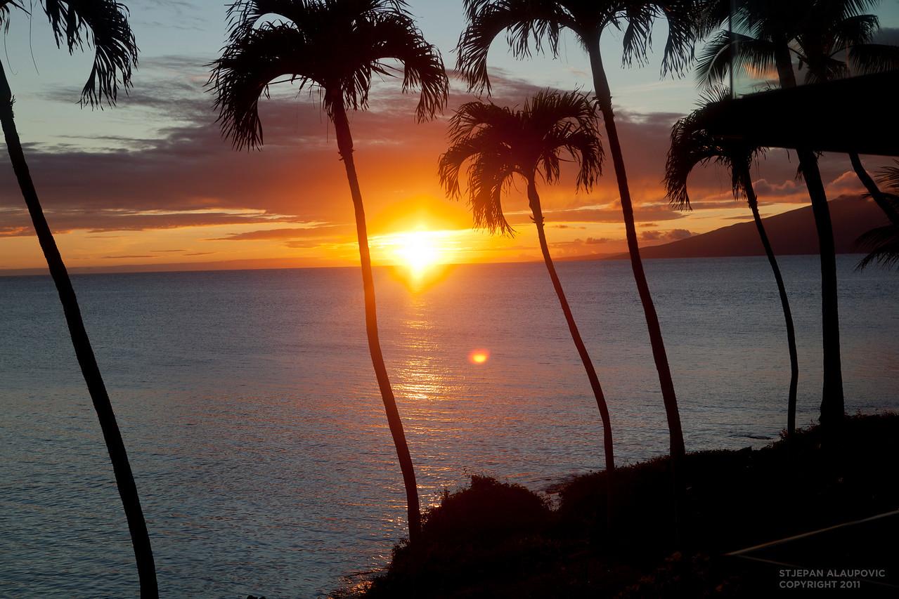 Palm Tree Sunset in Napili Kai