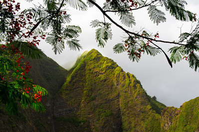 Iao Valley State Park, with flowering Heleconia branches framing the lush valley walls in morning fogr, Maui, Hawaii.