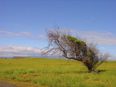 Tree at South Point