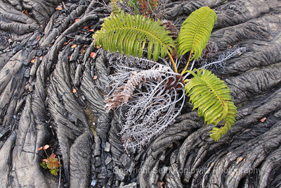Lava and Fern – Big Island, Hawaii (2009)