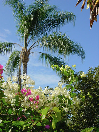 Coconut Tree and Flowers