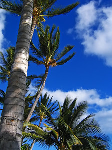 Blue Sky Palms Molokai