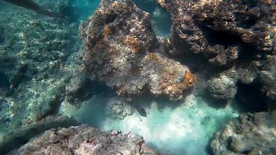 HI underwater-18