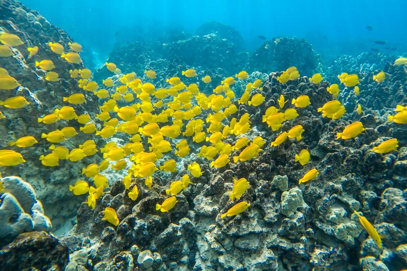 Yellow Thang!