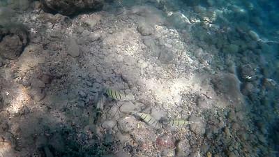 HI underwater-25