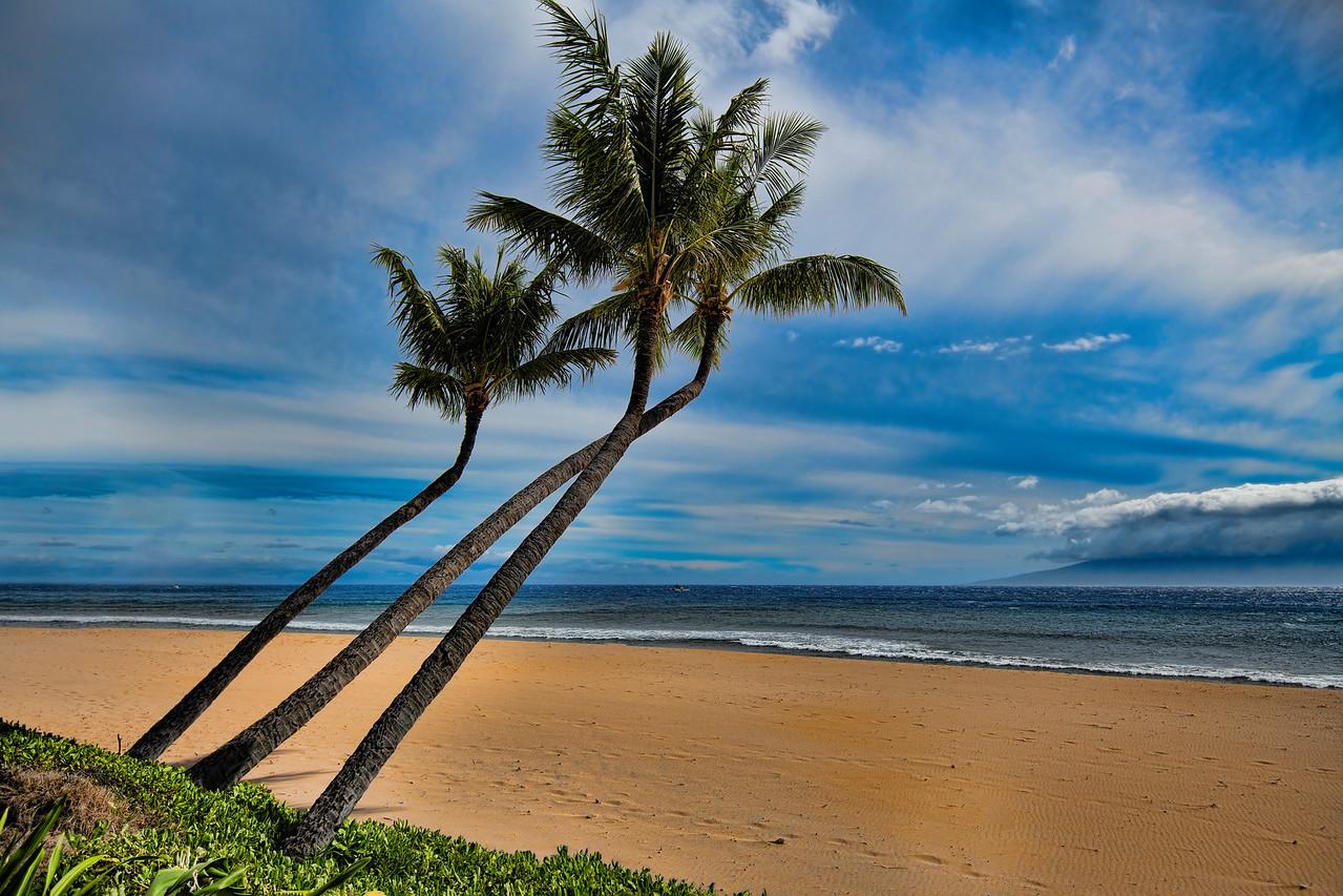 Bent palms on Kaanapali Beach