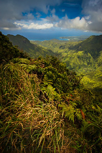 Scenes from the views of the Pihea Ridgeline on the island of Kauai.  Photo by Kyle Spradley | www.kspradleyphoto.com