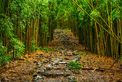 Trail to Waimoku Falls, Maui