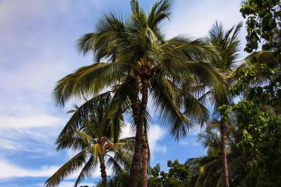 Kuhio Beach Park (20)